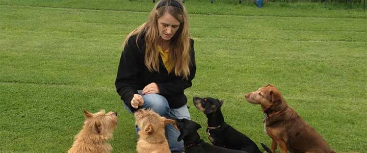 Linda working with dogs