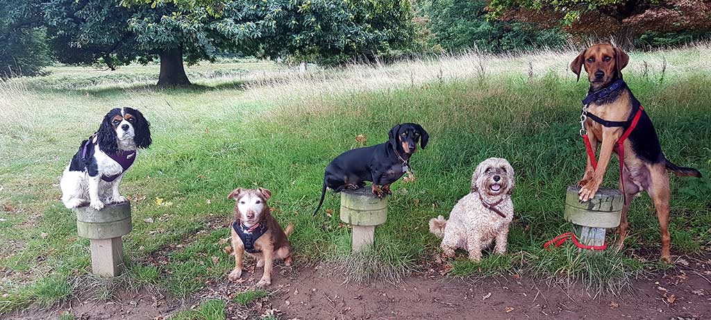 Dogs enjoying a Busters walk